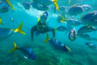 whitsunday-islands-snorkelling-fish