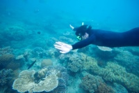 whitsunday-islands-snorkelling-fish-reef